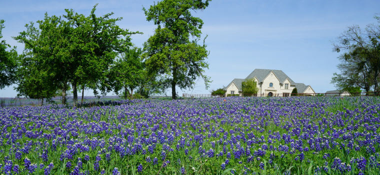 what is exempt property in Texas?